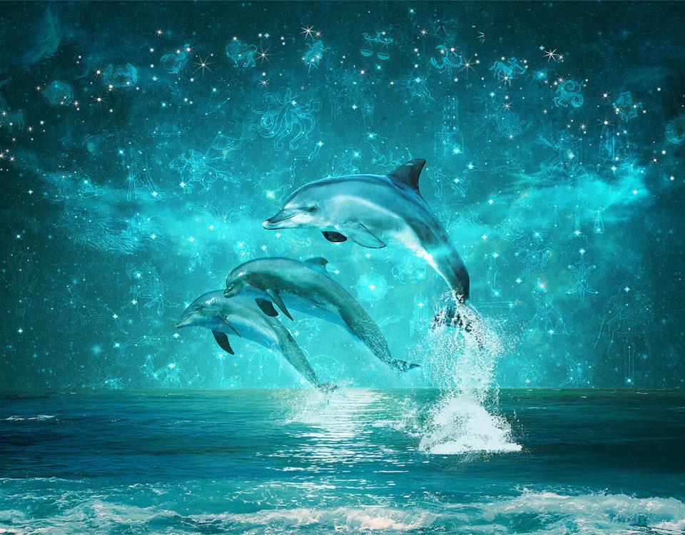 Обои с дельфинами для ванной являются отличным дизайнерским решением для модного оформления интерьера. Вписываются во все варианты ремонта, вызывают непередаваемые ощущения. Наиболее хорошо смотрятся 3д обои дельфины, которые позволяют погрузиться в сказочный мир океана.