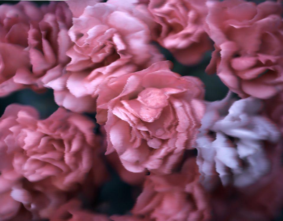 3D цветы пионы обои на стену Краснодар
