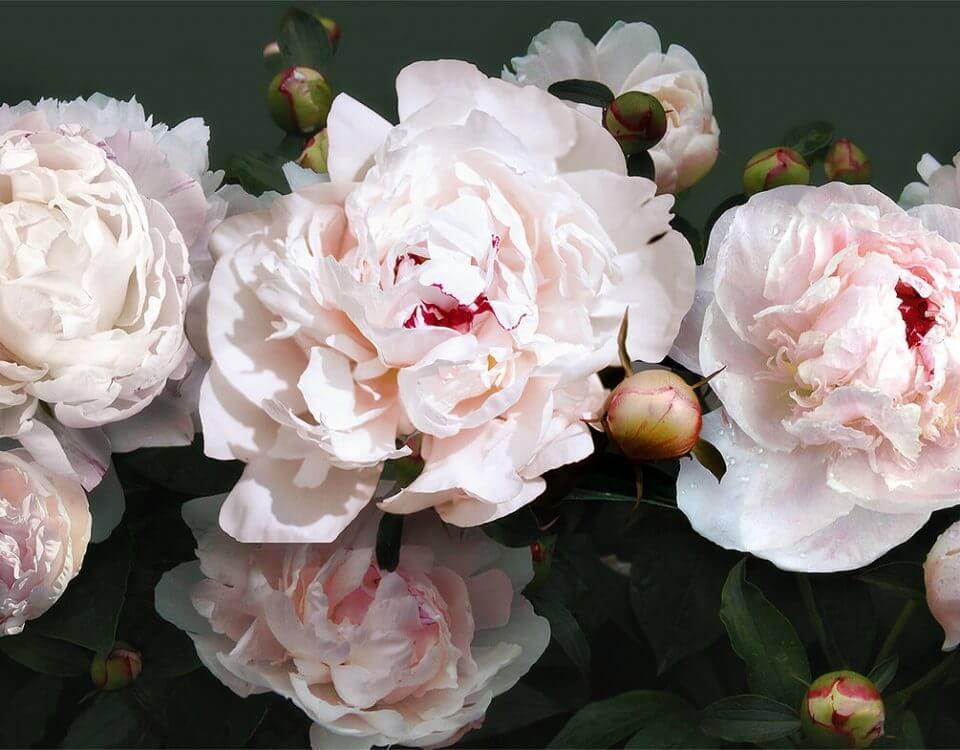 фотообои крупными цветами