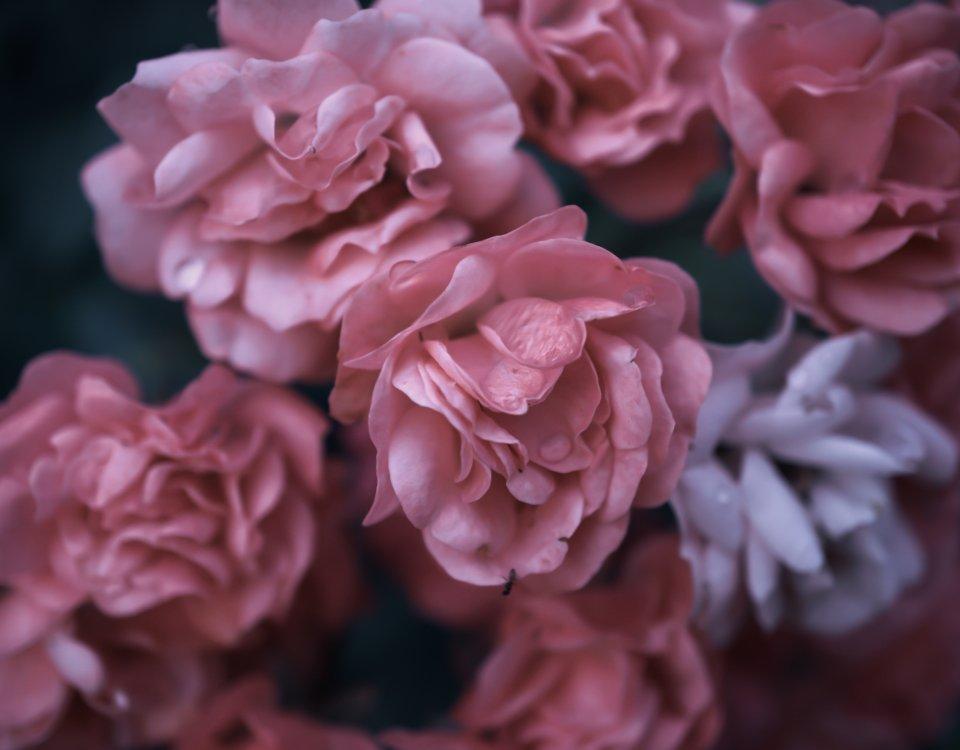 фотообои с крупными цветами