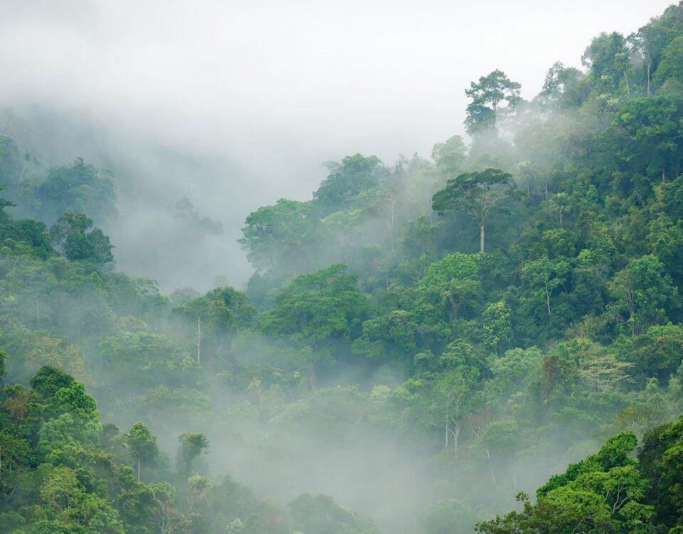 купить фотообои лес в тумане с холмами
