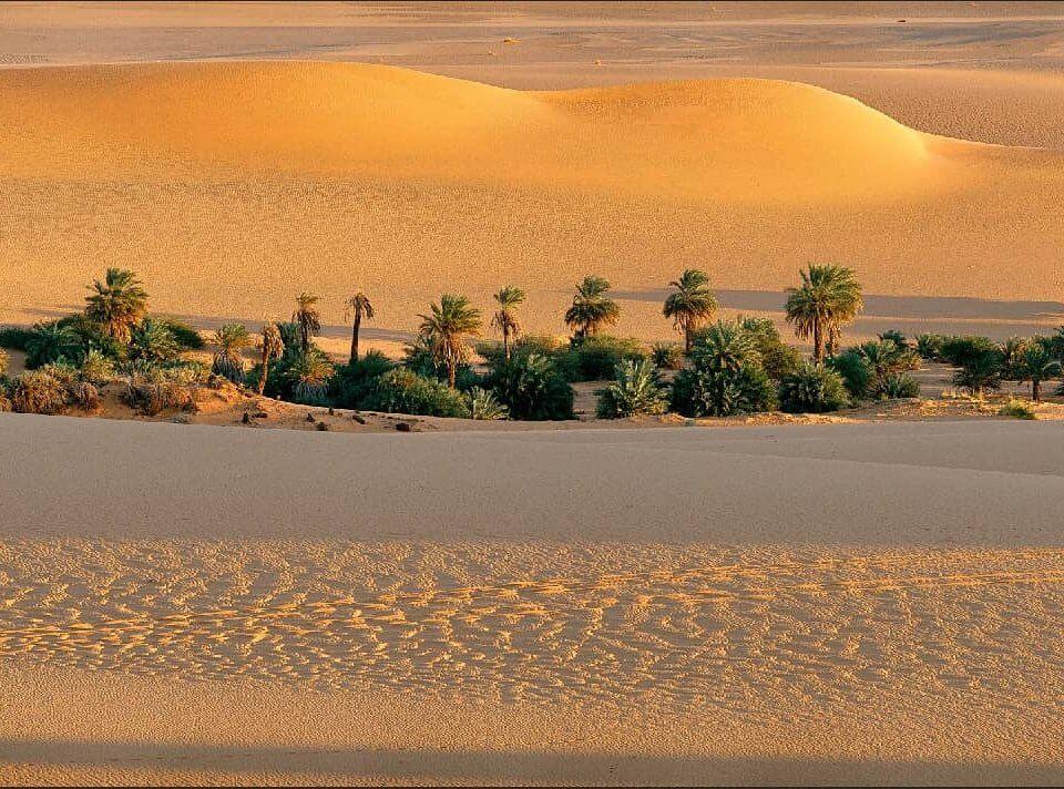 фотообои пустыня. панно с пустыней. широкоформатный принт пустыня в отличном качестве.