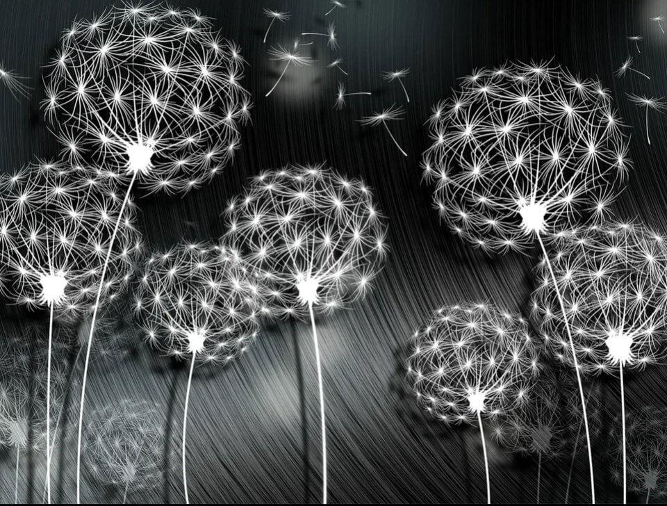фотообои цветы одуванчики