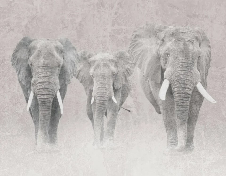 фотообои со слонами
