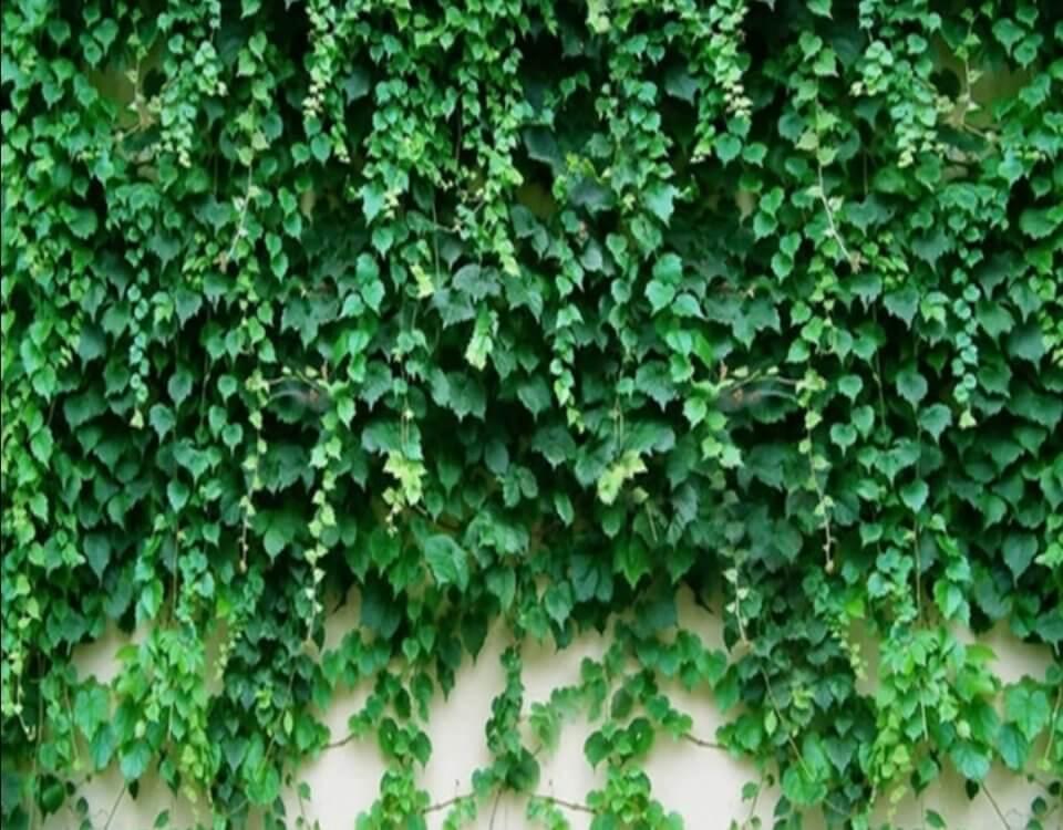 фотообои с листьями на стену