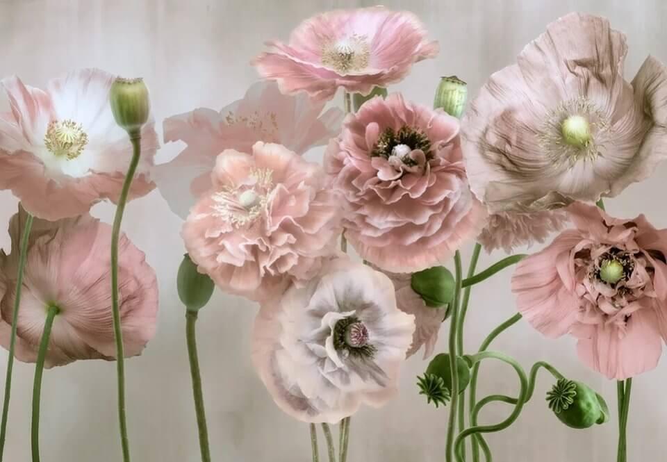 фотообои крупные бутоны цветков на стену