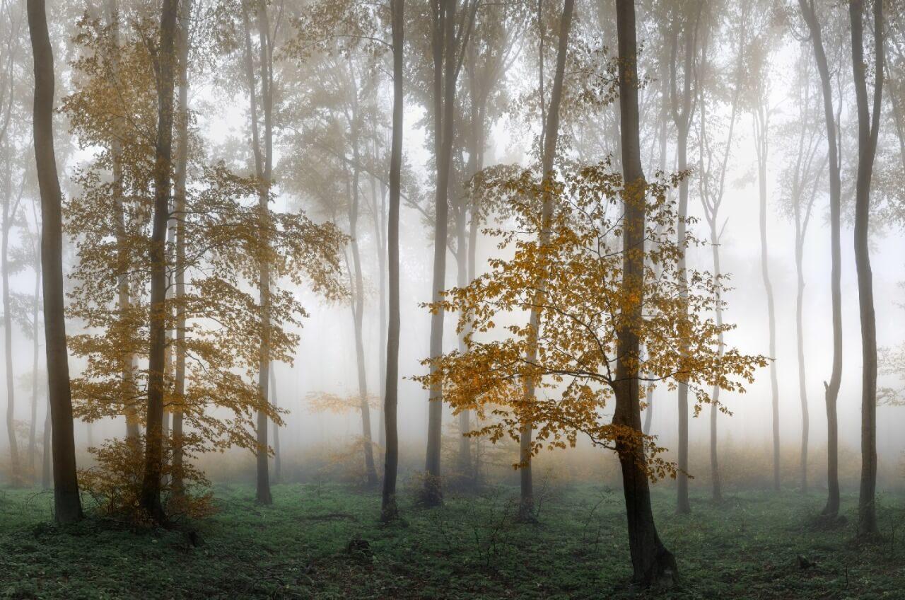 фотообои на стену лес