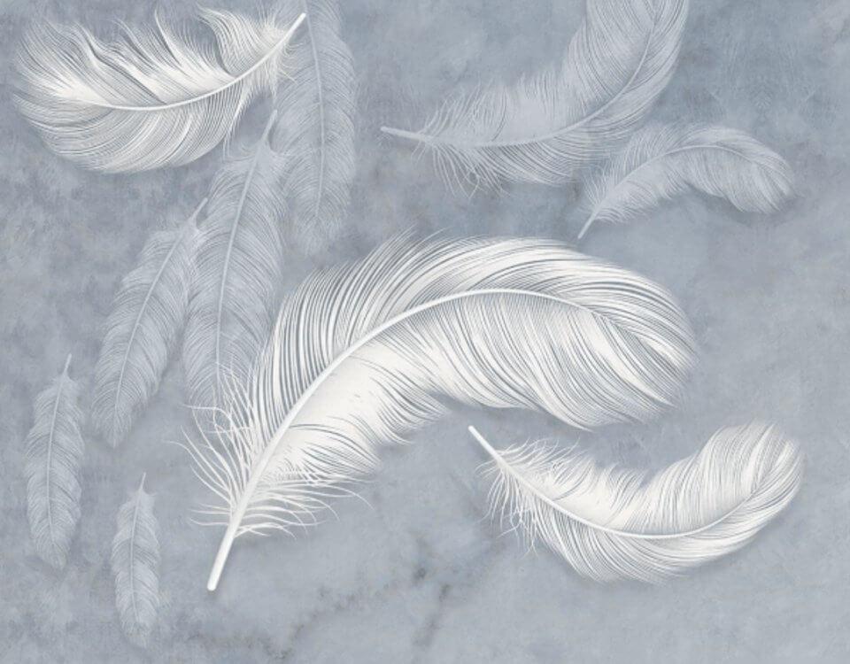 фотообои белые перья на светлом фоне
