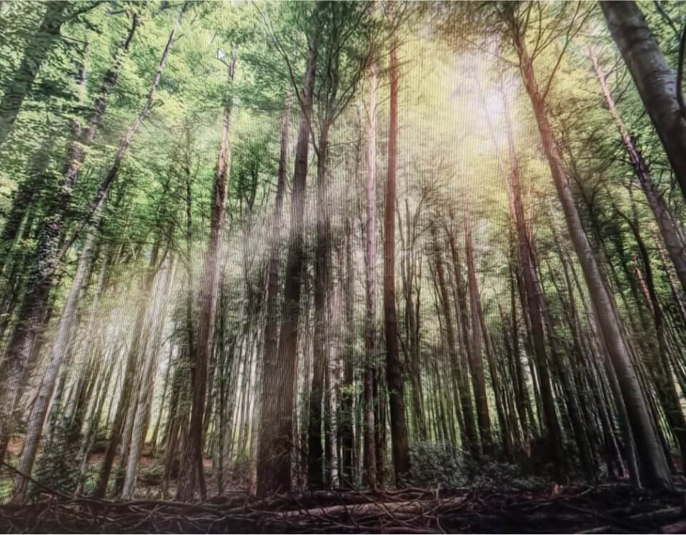 фотообои лес на стену