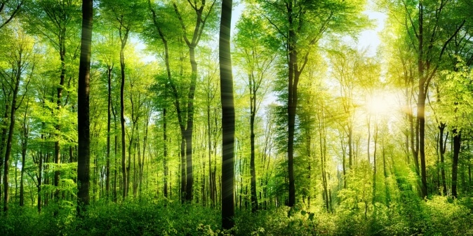 лес фотообои на стену