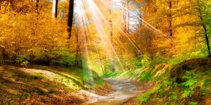 фотообои солнечный лес на стену